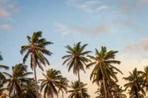 Bahamas Forex License